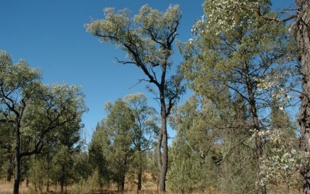 N20-10-11-CSIRO-regrowth